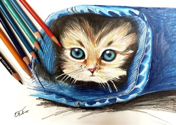 colored pencil kitten